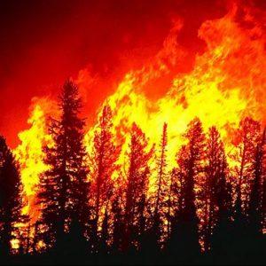 В САЩ заради горски пожари евакуират десетки хиляди жители