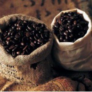 Кафето може да изчезне до 2080 година