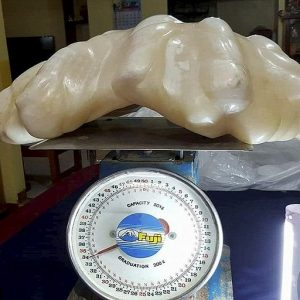 Рибар намери 34 кг перла в гигантска мида