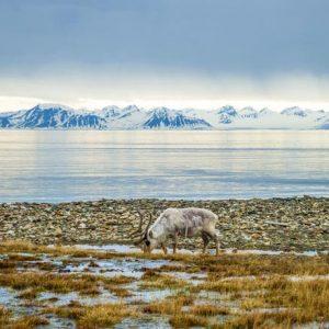 Средната температура в Арктика е с 20 градуса над нормата