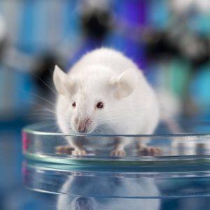 Стволовите клетки са подмладили цяло животно