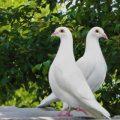 Гълъбите могат да се движат в пространството и времето