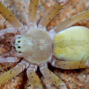 Пустинните паяци изграждат фантастични домове
