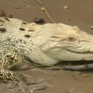 Необичаен звяр събира любители на природата в Австралия