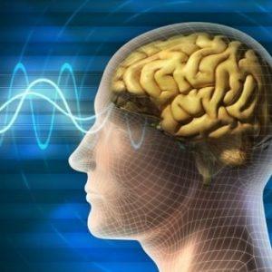 Как думите променят мозъка
