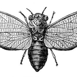 Cicada 3301 – най-мистериозната интернет загадка въобще